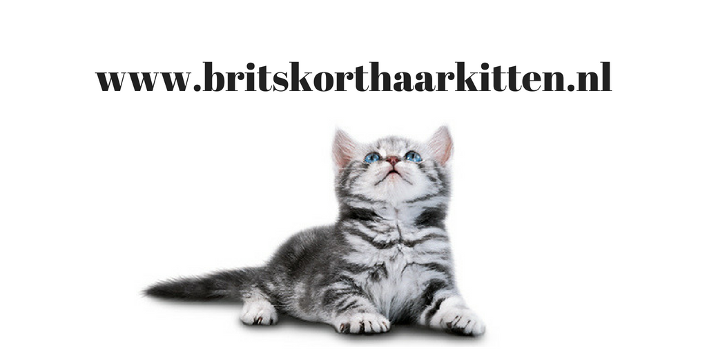 cattery brits korthaar cattery